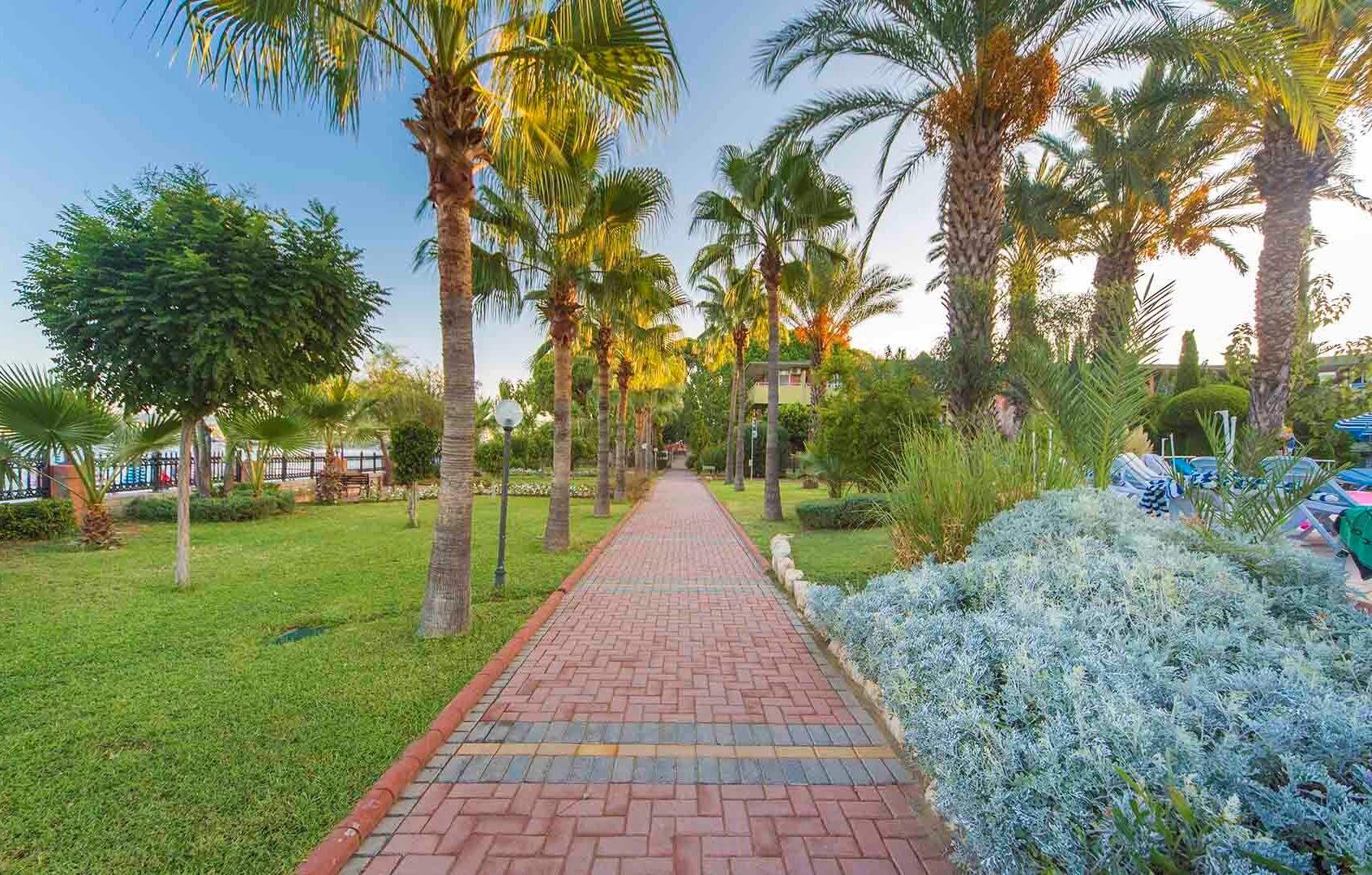 Lonicera World garden